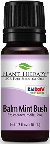 - Plant Therapy Balm Mint Bush 10 mL (1/3 oz) Essential Oil 100% Pure, Undiluted, Therapeutic Grade