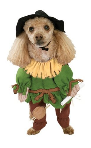 Rubies Costume Wizard of Oz Scarecrow Pet Costume, Large