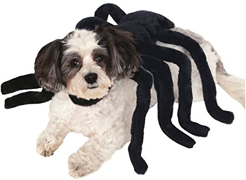Rubies Costume Company Pet Spider Harness Costume, (Spider Costumes)