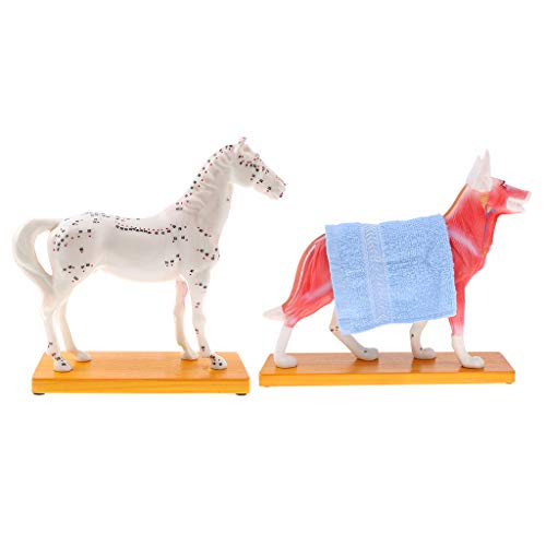 horse acupuncture chart - 8