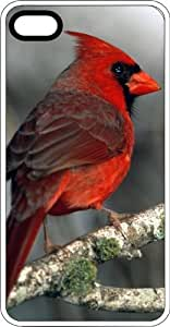 Male Red Cardinal Virginia State Bird Clear Plastic Case for Apple iPhone 4 or iPhone 4s