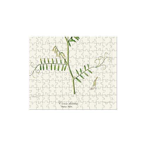 (Media Storehouse 252 Piece Puzzle of Hairy Tare Plant Botanical Engraving 1843 (13610847))