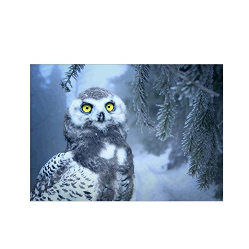 """Succeedtop DIY 5D Diamond Painting by Number Kits, Crystal Rhinestone Embroidery Paintings Pictures Arts Craft for Home Wall Decor,Winter Owl (Winter Owl, 3040cm/11.815.7"""")"""
