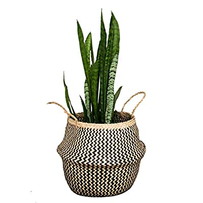 Natural Craft Seagrass Belly Basket Zigzag Black Storage (Size: 12x12x12inches), Laundry, Picnic Woven Straw Beach Bag - Plant Pots Cover Indoor Decorative (Plush Criss-Cross Seagrass Black) - HOME DECOR - The basket is gorgeous for plants. The texture is soft and delicate fabric, sturdy enough to hold a heavier potted plant and looks great in the home MULTI PURPOSE - Can be use as a picnic basket, storing toys, magazines totes, towels, blankets. It folds down like a bowl for display purposes and it is practical. The handles make it great to just pick up and use as a beach bag. HANDMADE, ECO FRIENDLY - 100% Handwoven from Sustainably Grown Seaweed + Black Wild-wood Fiber by local artisan in Vietnam with love and care. - living-room-decor, living-room, baskets-storage - 41Q7OZspj1L. SS400  -
