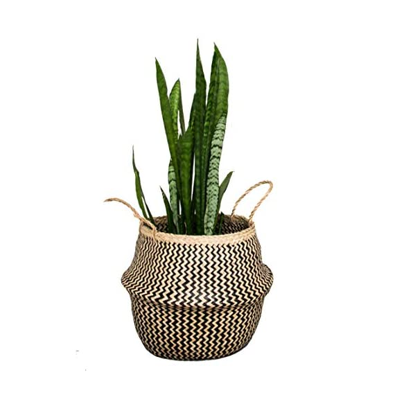 Natural Craft Seagrass Belly Basket for Storage (Color: Zigzag Black), Laundry, Picnic Woven Straw Beach Bag - Plant Pots Cover Indoor Decorative (Plush Criss-Cross Seagrass Black) - HOME DECOR - The basket is gorgeous for plants. The texture is soft and delicate fabric, sturdy enough to hold a heavier potted plant and looks great in the home MULTI PURPOSE - Can be use as a picnic basket, storing toys, magazines totes, towels, blankets. It folds down like a bowl for display purposes and it is practical. The handles make it great to just pick up and use as a beach bag. HANDMADE, ECO FRIENDLY - 100% Handwoven from Sustainably Grown Seaweed + Black Wild-wood Fiber by local artisan in Vietnam with love and care. - living-room-decor, living-room, baskets-storage - 41Q7OZspj1L. SS570  -