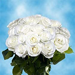 50 Fresh Cut White Roses for Valentine's Day | Tibet Roses | Fresh Flowers Express Delivery | The Perfect Valentine's Day Gift