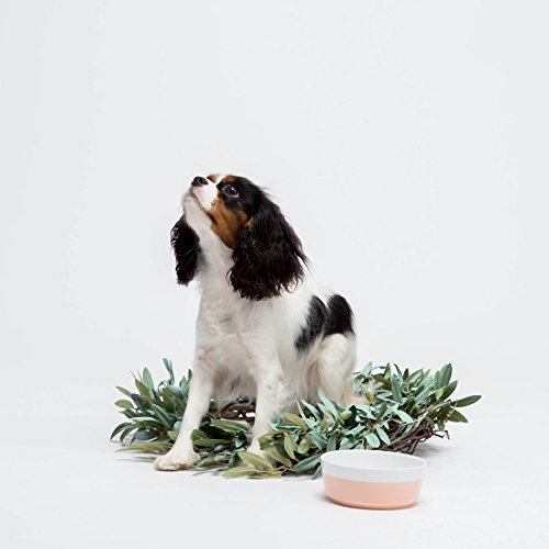 Image of Ceramic Dipper Dog Bowl (Small, Rose)