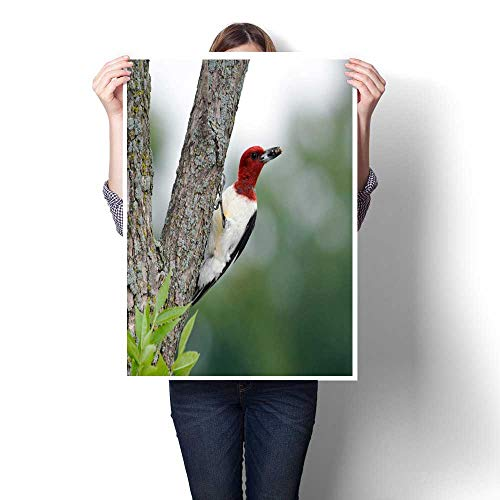 bybyhome Canvas Prints Wall Art Red-Headed Woodpecker Decorative Fine Art Canvas Print Poster K 16