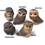 Harmony Ball harmony Kingdom Pot Belly Boreal Owl