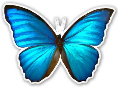 Butterflies in the Blue Sky Pattern Automotive Car Vinyl Magnet