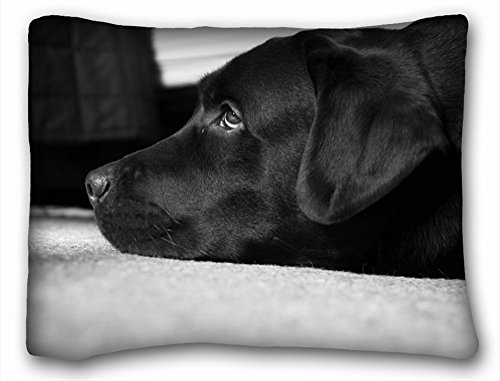 - TSlook Throw Blankets Black and White Labrador Fleece Blanket for Couch/Sofa/Bed 40x50