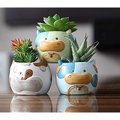 Sixdrop 2.7 Inch Cow Succulent Pots | 6 Succulent Pots with Drainage | Ceramic Animal Planter Pots for Cacti | Cow Planter Set | Cow Decorative Succulent Pots for Home, Office, Windowsill : Garden & Outdoor