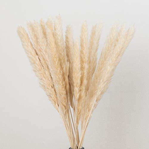 Pampas Plume - Dongliflower Natural Dried Pampas Grass,Small Reed Plumes,Wedding Flower Bunch, 24