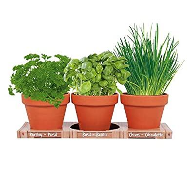 Herb Trio Grow Kit | Grow Basil, Parsley and Chives | Grow a Herb Garden from Seed in Unique Terra Cotta Pots | GMO Free Herbs | Exclusively by TotalGreen Holland