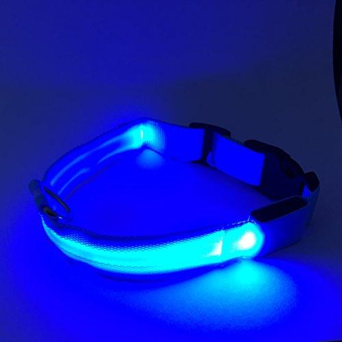 Flashing Dog Collar - LED Lights Up to Keep Pet Safe at Night XL Blue