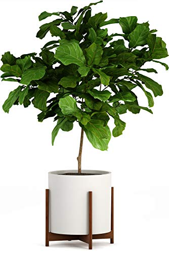 Fox & Fern Wide Plant Stand - Acacia - EXCLUDING 15