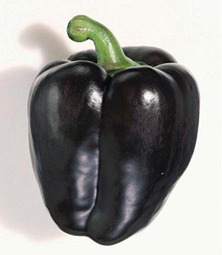 Seeds Sweet Pepper Black Horse Bell Vegetable Organic Heirloom Ukraine