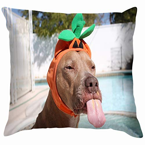 Funny Dog Wearing Cute Halloween Costume Animals Wildlife Holidays Funny Square Throw Pillow Cases Cushion Cover for Bedroom Living Room Decorative 18X18 Inch ()
