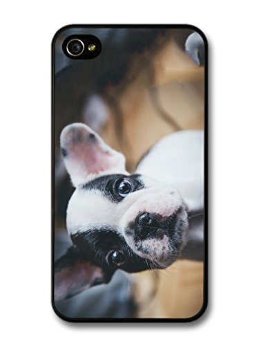 Cool Cute French Bulldog Puppy Photography Design case for iPhone 4 4S