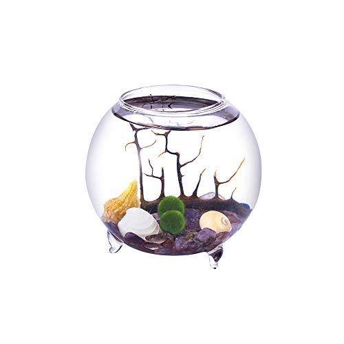 EssenceLiving Mini Aquarium kit - 4 Inch Footed Terrarium with 2