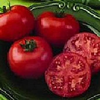 VISA STORE Semilla Champion II tomate: Amazon.es ...