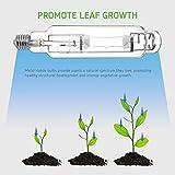 VIVOSUN 2-Pack 1000 Watt Metal Halide MH Grow Light
