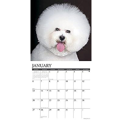 Just-Bichons-Frises-2019-Wall-Calendar-Dog-Breed-Calendar-Calendar–Wall-Calendar-July-15-2018