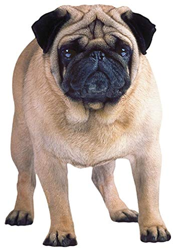 Paper House Productions M-0043E Die Cut Refrigerator Magnet, Pug (6-Pack)]()