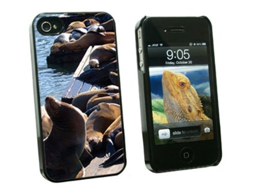 Graphics and More San Francisco Sea Lions - Pier 39 Fisherman's Wharf - Snap On Hard Protective Case for Apple iPhone 4 4S - Black - Carrying Case - Non-Retail - Shops Pier 39