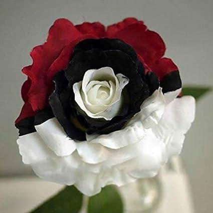 Amazon.com 100pcs Rare Unique Black Pearl Rose Flower Seeds
