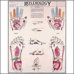 Reflexology Chart (Reflexology Poster)