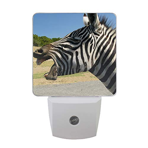 Beautiful White Teeth Zebra LED Night Light Dusk to Dawn Sensor Night Home Decor Desk Lamp