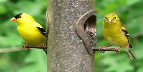 Goldfinch Birds #1 Photo License Plate
