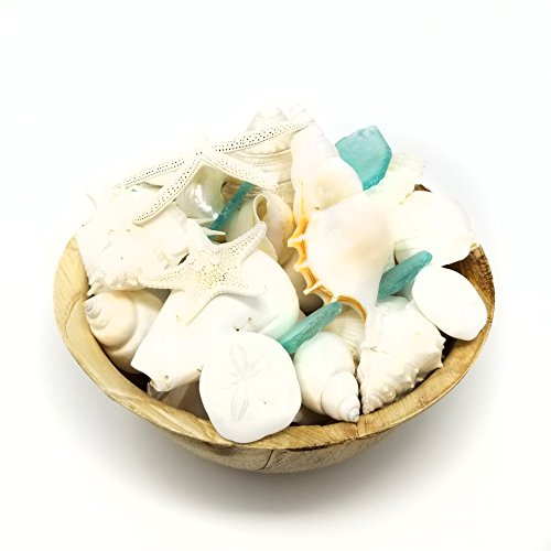 Tumbler Home White Seashells with Sea Glass - Home Decor Wedding Luxury Sea Shell Mix, Christmas or Crafts - 30+ Shells (Shell Decor Coastal)