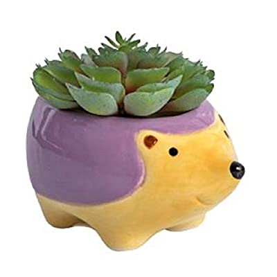 Hudson The Hedgehog Ceramic Animal Mini Succulent Planter Yellow/Purple, Boxed Gift : Garden & Outdoor