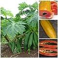 """50 Seeds Vietnamese Dwarf Cylindrical Papaya """"Kaek dahm"""" Low Bearing Tree Papaya SEEDS"""