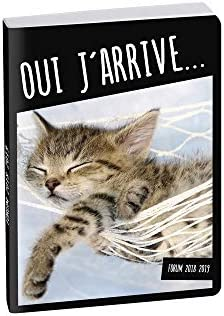 Agenda 2018 – 2019 – 17 x 12 cm – intra-vaginal – Funny Pets gato ...