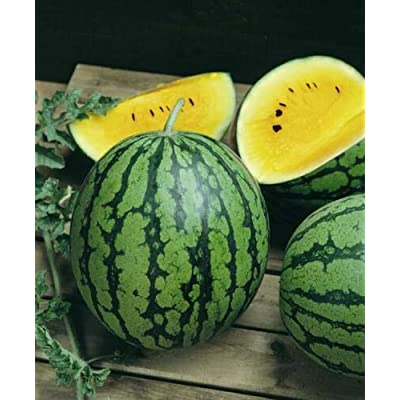 Grandiosy Baby Doll Yellow Watermelon Seeds Bright Yellow Interior Extra Sweet Compact : Garden & Outdoor