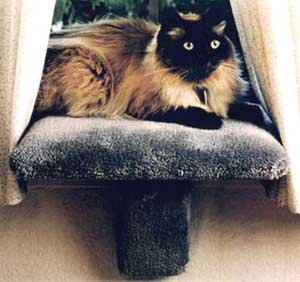 Small Padded Cat Window Perch : Color Speckled Sand : Size Small Perch by CD Pets