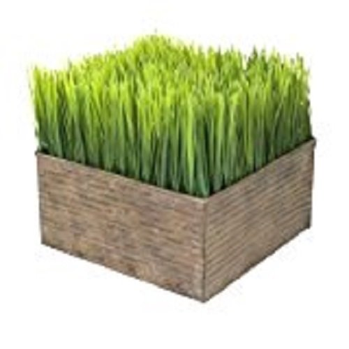 FAUX Botanicals Square Potted Plastic Wheat Grass Display