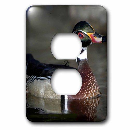 - 3dRose lsp_91330_6 Wood Duck Male portrait-US24 BFR0122-Bernard Friel 2 Plug Outlet Cover Multicolor