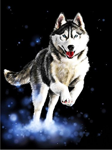 HOS Diy Oil Painting Paint By Number Hand Paintworks 16X20 Inches Siberian Husky Dog(PBN004)