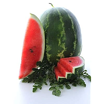 Cal Sweet Supreme Watermelon Seeds, 125+ Premium Heirloom Seeds, ON Sale!, Rich Delicious Flavor! (Isla's Garden Seeds), Non GMO, 85-90% Germination Rates, Highest Quality Seeds : Garden & Outdoor