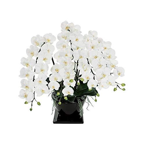 人工観葉植物 ピュアオーキッド5本立(ファレノジュリアーノ)ホワイト 光触媒加工 高さ80cm zv7000 (代引き不可) インテリアグリーン 造花 B07SYX6N9W