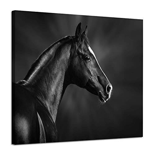 (Animals Pictures Wall Decor Paintings: Black Arabian Horse Head Portrait in The Darkness Photographic Artwork Print on Wrapped Canvas for Walls Decoration(24