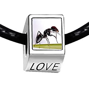 Chicforest Silver Plated Foraging Ant Photo LOVE Charm Beads Fits Pandora Charm