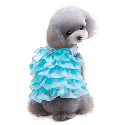 Pet D (Halloween Pets In Costumes)