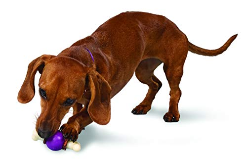 PetSafe Busy Buddy Bouncy Bone, Treat Holding Dog Toy, Small
