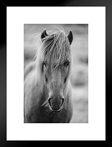 Portrait of Icelandic Pony Horse in Black and White Photo Art Print Matted Framed Wall Art 20x26 inch ()