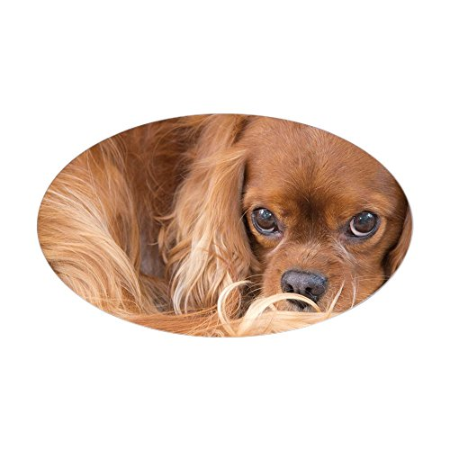 - CafePress Sweet Friend Ruby Cavalier King Cha Oval Bumper Sticker, Euro Oval Car Decal